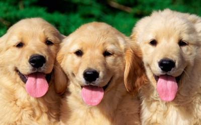 Најсреќните животни во светот