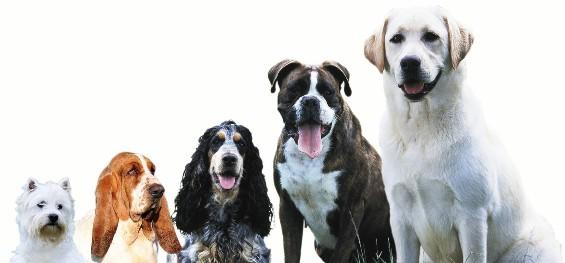 7 грешки при изборот на куче