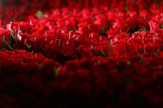 Милион ружи за лутата сопруга