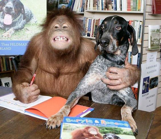 Верното пријателство помеѓу кучето Роско и орангутанот Сурија