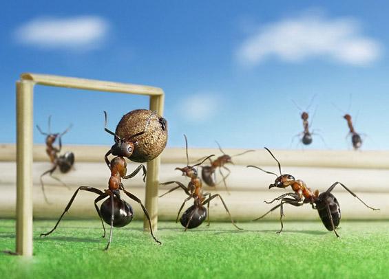 Mравките во едно поинакво светло