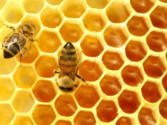 5 митови и вистини поврзани со сезонските алергии