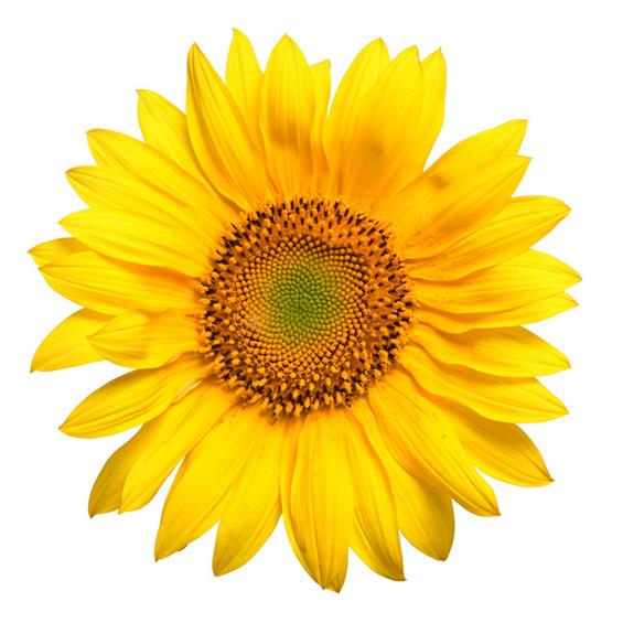 Значењето на цвеќињата