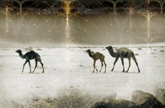 Комплексноста на светот преку уникатни фотографии