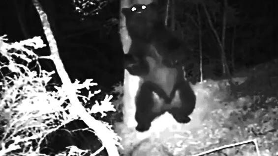 Што прават животните во шумата кога ќе падне ноќ?