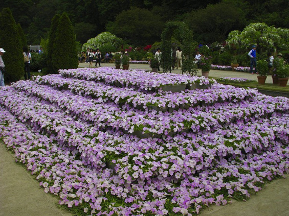 Романтичното цветно кралство во Јапонија