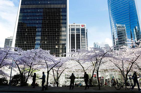 Расцветена пролет во различни делови од светот