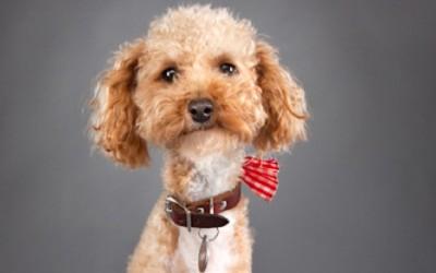 Можете ли да не се заљубите во ова кученце?