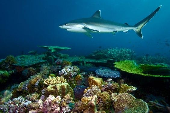 Моменти од подводниот живот низ неверојатни фотографии