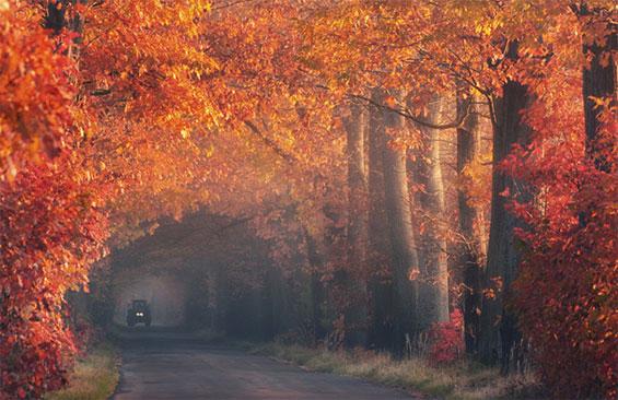 Утринска прошетка на умот