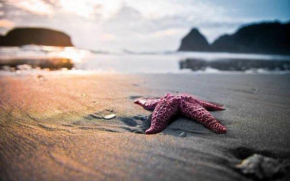 Интересни факти за впечатливите морски ѕвезди
