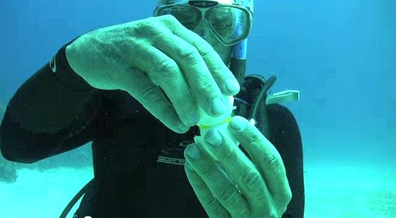 Што ќе се случи ако скршите јајце под вода?