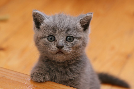 Зарем ова не се најслатките мачиња што некогаш сте ги виделе?