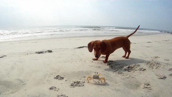 Необично пријателство помеѓу кутре и ракче