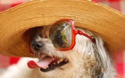 Како да го заштитите вашето маче или куче од топлото време?