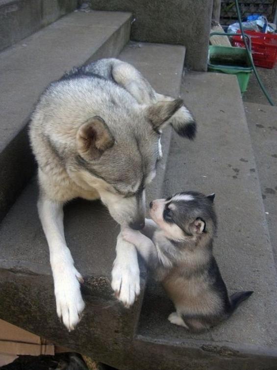 Животните со своите мали слатки наследници