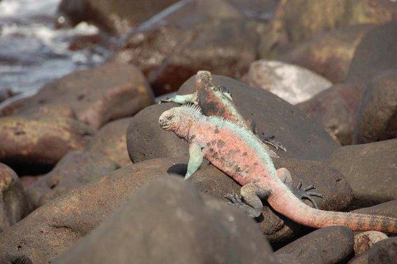 Живиот свет на Галапагос