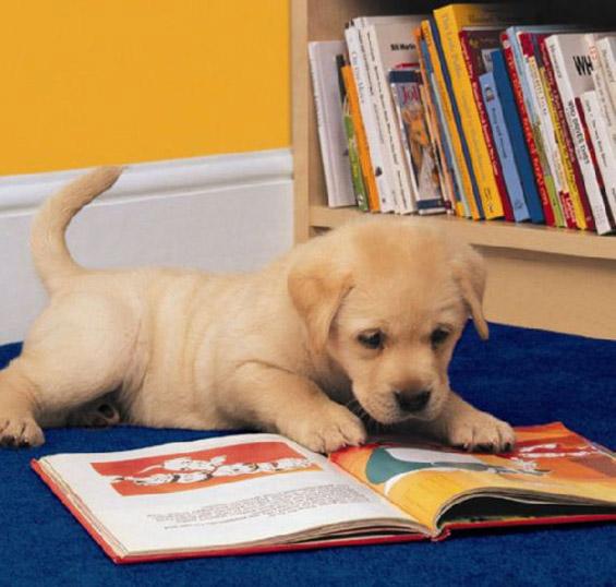 И за животните почна учебната година