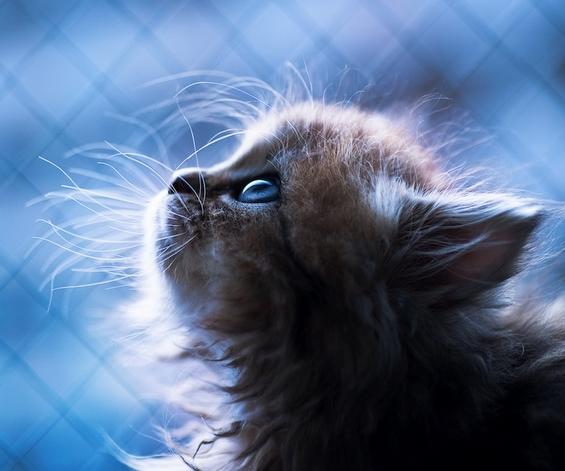 Ова е најслаткото маче на светот