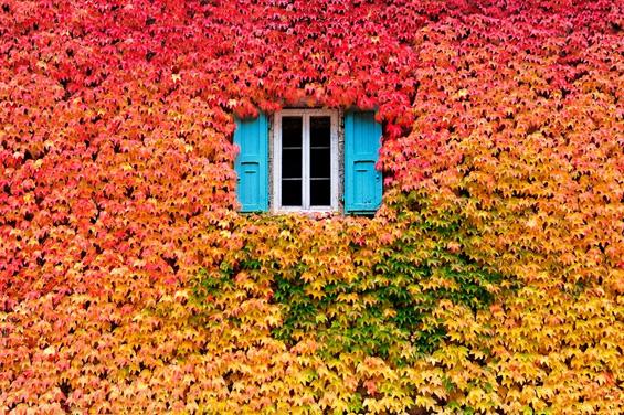 Шармот на есента