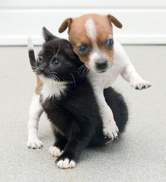 Напуштено кутре и маче, најдобри другари