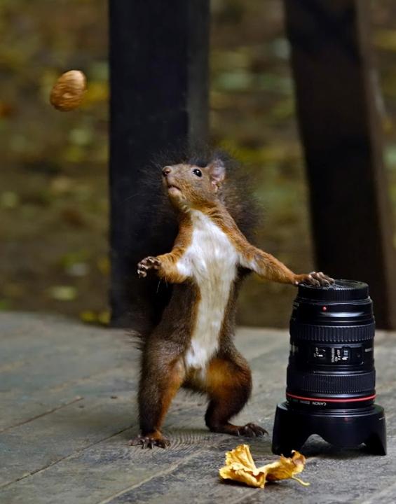 Животни фотогорафирани во вистинскиот момент