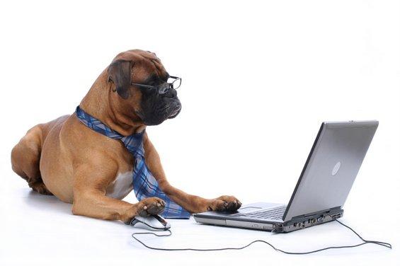Тест: Кое е вашето внатрешно професионално животно?