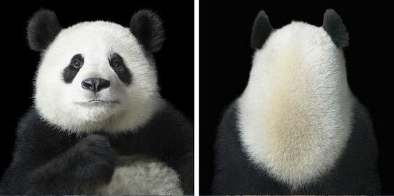 Харизматични портрети на животни