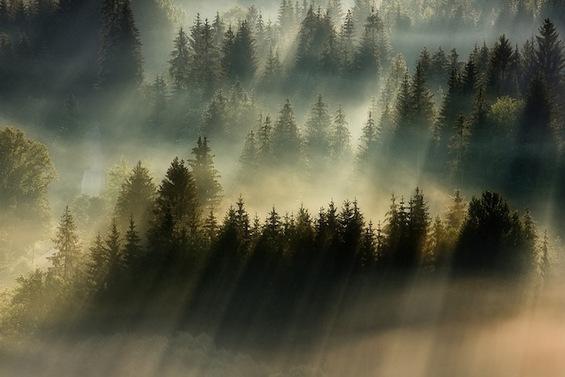 Кога сонцето и маглата ви посакуваат добро утро…