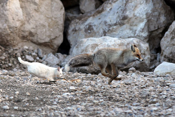 Вистинска приказна за пријателството помеѓу една лисица и една мачка