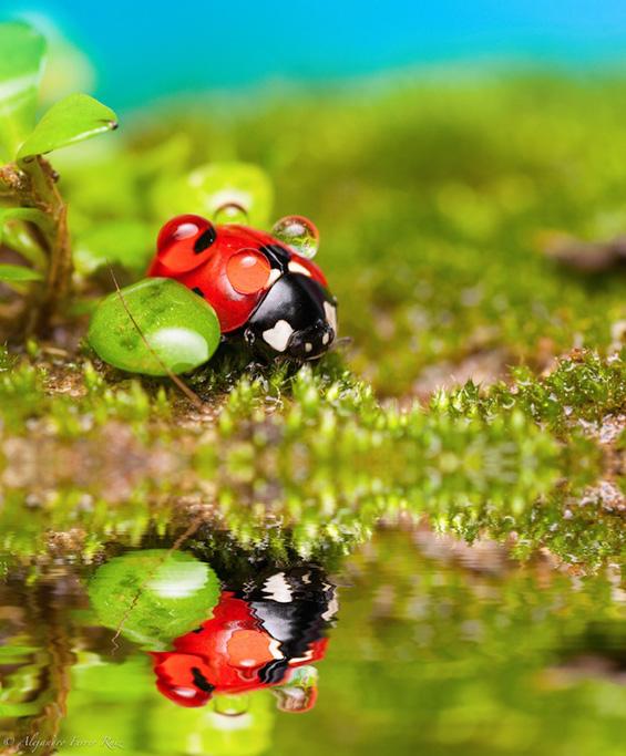 Летни, летни бубамаро, донеси ми гости