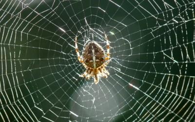 Како пајакот си ја плете мрежата?
