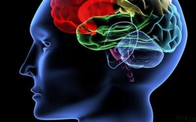 Дали луѓето навистина употребуваат само 10 проценти од мозокот?