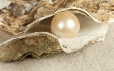 Како остригите создаваат бисери?