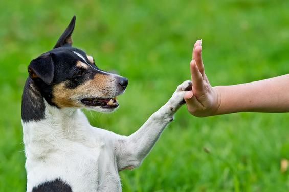 Речник на кучешкиот јазик