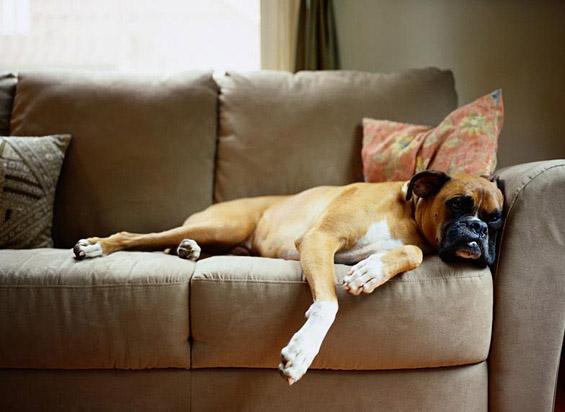 Што прави куче кога ќе го оставите само дома?