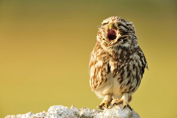Слатки фотографии со животни кои ќе ве натераат да зевате