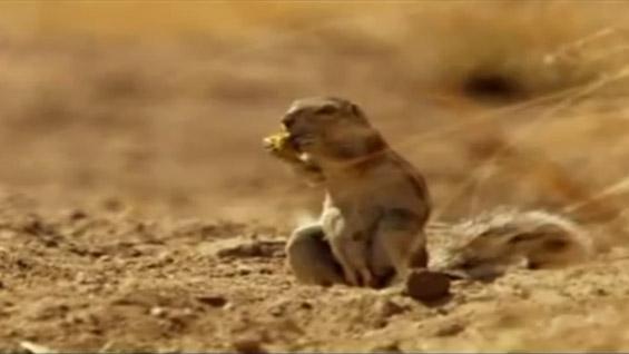 """Запознајте ја реалната верзија на верверичката од """"Ледено доба"""""""