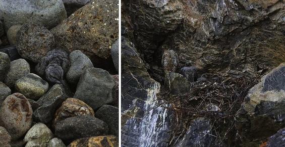 Можете ли да ги пронајдете животните на овие слики?
