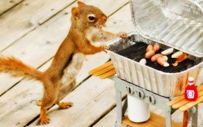 Слатките верверички во дворот на една фотогрфака