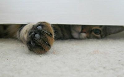 Снаодлива мачка која не сака да седи сама
