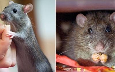 Вистинска приказна: Како уличен стаорец им ја спасил врската