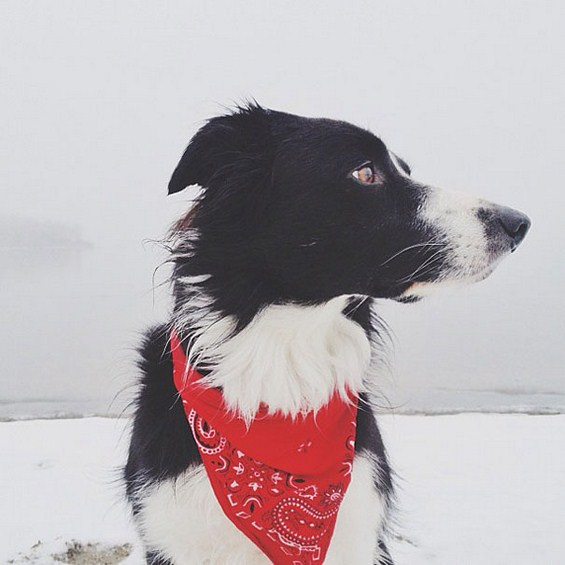 Можете ли да го пронајдете кучето на фотографииве?