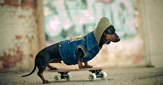 Неодоливи и хумористични фотографии со кученца