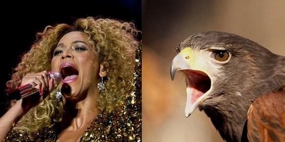 Како ќе изгледаа познатите пејачи ако беа птици? :)