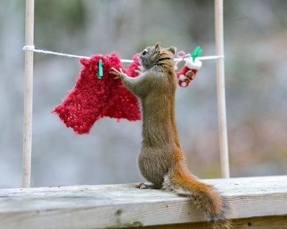 Слатките верверички во дворот на една фотогрaфка