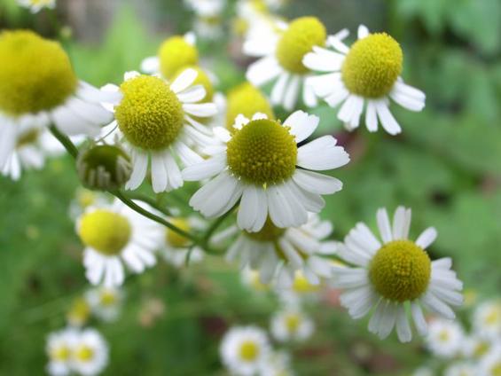 7 природни лекови против пролетните алергии
