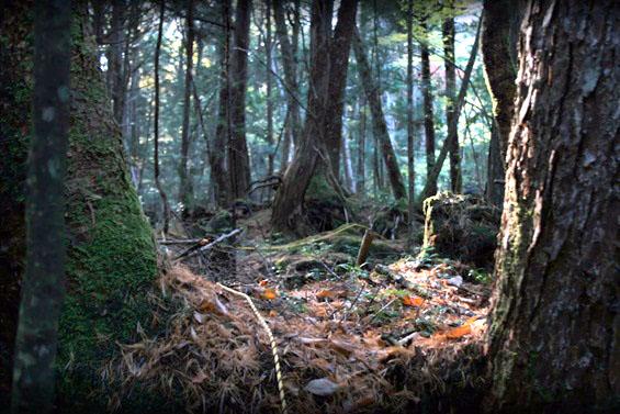(1) Најстрашните шуми во светот