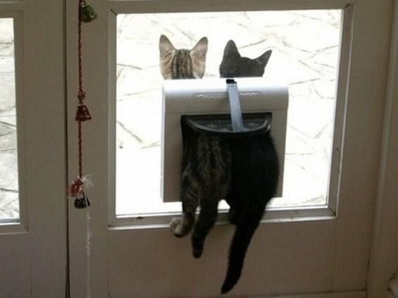 Мачки кои ни самите не знаат како се нашле тука