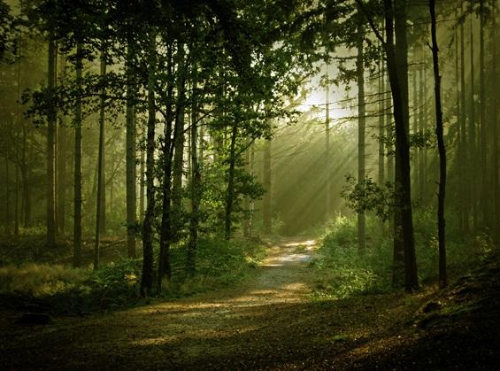 Најстрашните шуми во светот